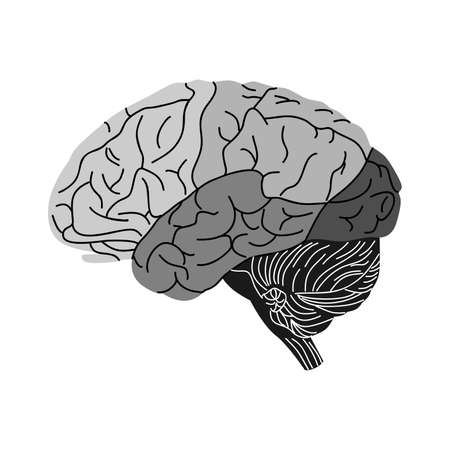 gray matter: the illustration dedicated to the human brain. Illustration