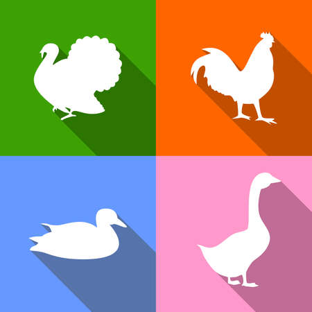 rooster: Icons dedicated to poultry - turkey, rooster, duck, goose. Illustration