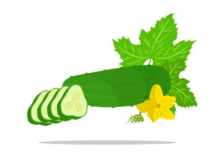 garden stuff: the illustration which shows some vegetables - cucumbers.