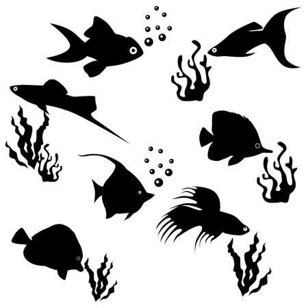 squama: the set of animals - a variety of decorative aquarium fishes.