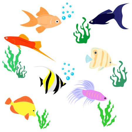 alga: the set of animals - a variety of decorative aquarium fishes.