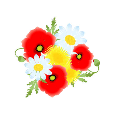 poppies: beautiful and bright illustration with flowers - poppies, dandelion, chamomile.