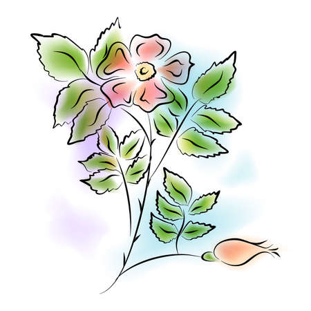 wild rose: Illustration - watercolor painting - of a wild rose flower.