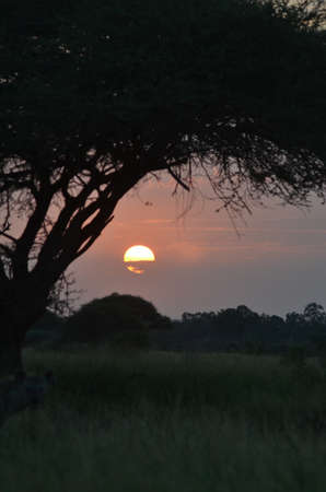 africa sunset: Africa tramonto ritratto