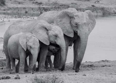 Family heard of elephants Standard-Bild