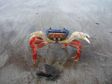 fu: Kung Fu Crab