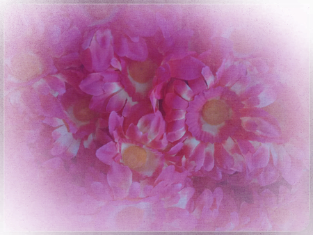 perianth: Background or texture or border with flowers - rose Stock Photo