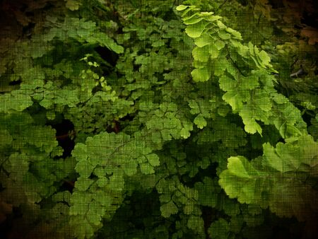 Background - Plant that are grown for decorative purposes in gardens and landscape design projects or houseplants Reklamní fotografie