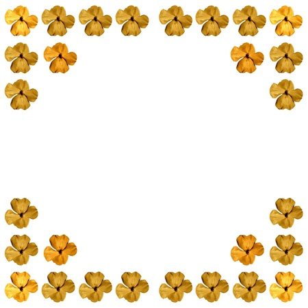 balsam: Background, border or texture with flower