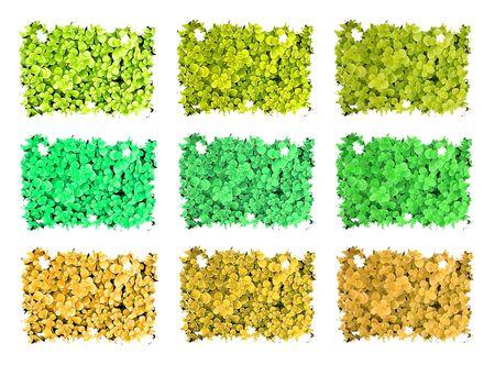 Patterns - Plant Stock Photo