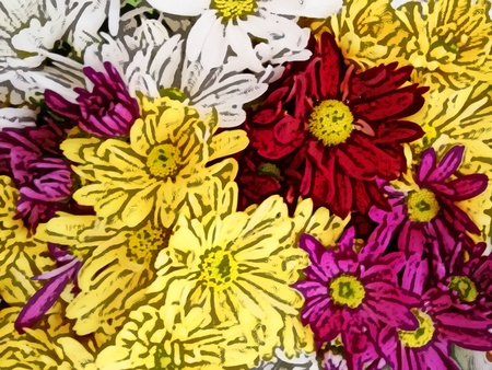perianth: Yellow, white, red and pink daisies - A popular plant of the daisy family, having brightly colored ornamental flowers and existing in many cultivated varieties (Line drawn) Stock Photo