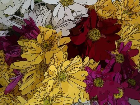 Gelbes, weißes, rotes und rosa Gänseblümchen - Eine beliebte Pflanze der Gänseblümchenfamilie mit bunten Zierblumen und in vielen kultivierten Sorten (Linie gezeichnet)