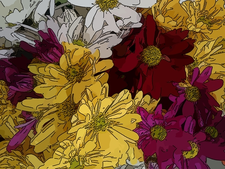 Yellow, white, red and pink daisies - A popular plant of the daisy family, having brightly colored ornamental flowers and existing in many cultivated varieties (Line drawn) Stock Photo