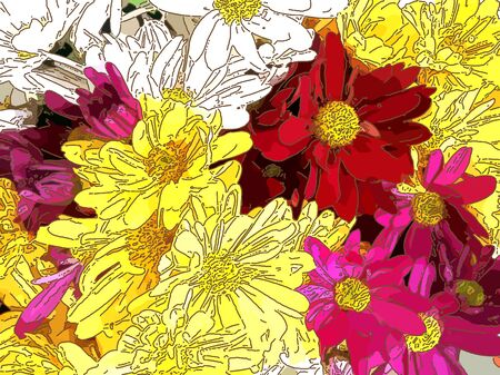 Yellow, white, red and pink daisies - A popular plant of the daisy family, having brightly colored ornamental flowers and existing in many cultivated varieties (Line drawn) Standard-Bild