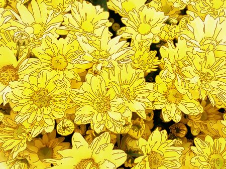 perianth: Yellow daisies - A popular plant of the daisy family, having brightly colored ornamental flowers and existing in many cultivated varieties (Line drawn)