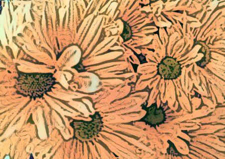 perianth: Pink daisies - A popular plant of the daisy family, having brightly colored ornamental flowers and existing in many cultivated varieties (Line drawn) Stock Photo