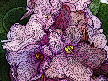 balcony: The African violet is a herbaceous plant of temperate regions, typically having purple, blue, pink or white five-petaled flowers, one of which forms a landing pad for pollinating insects - (Line drawn) Stock Photo