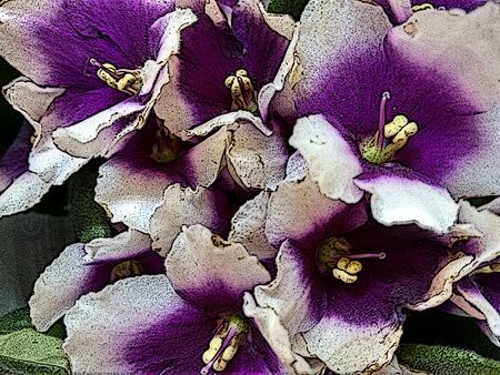 The African violet is a herbaceous plant of temperate regions, typically having purple, blue, pink or white five-petaled flowers, one of which forms a landing pad for pollinating insects - (Line drawn) Stock Photo