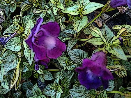 Purple purple or violet flower
