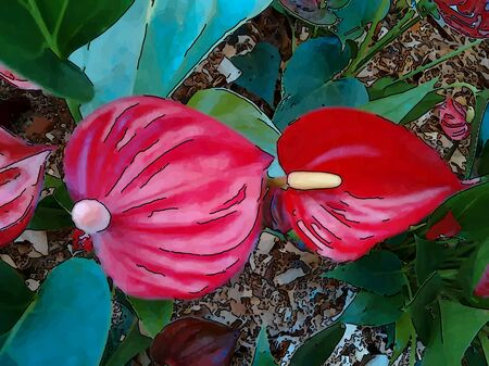 arum: The tropical American plant often grown elsewhere for its ornamental foliage or brightly colored flowering spathes.