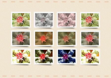 Framed photo collage - Bromeliad - Collage with flowers or flowers collage - Floral patterns
