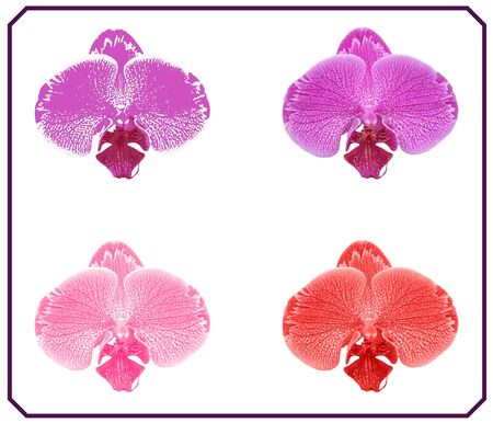 The Orchidaceae are a diverse and widespread family of flowering plants, with blooms that are often colorful and fragrant, commonly known as the orchid family.