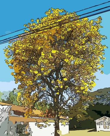 Handroanthus albus is a species of the genus Handroanthus tree. Popurlamente is called in Brazil yellow-ipe-of-saw, ipe gold, ipe-yellow.