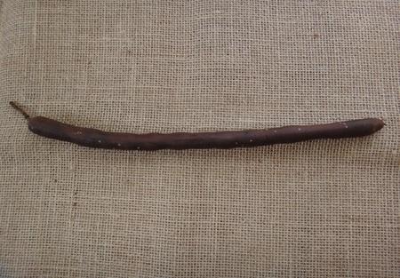 Cassia dry pod - Brown Stock fotó