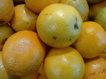 Orange, sweet orange or orange
