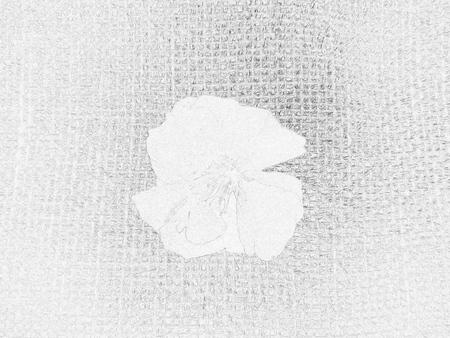 Oleander flower - Drawing
