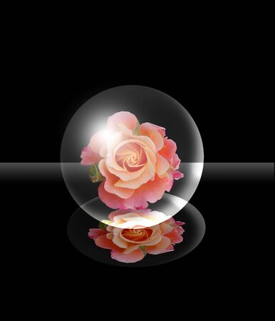 glass ball inside on a black background with pink Stock Photo - 6401359