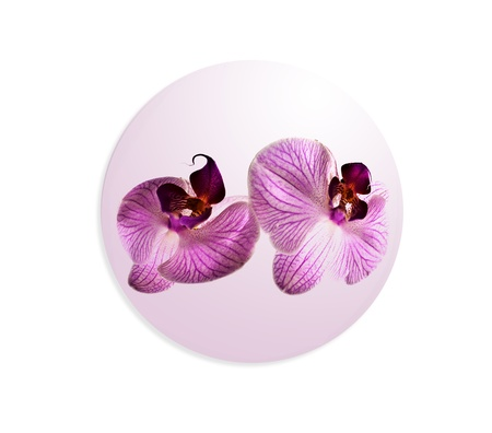 sphere with orchid on white background photo