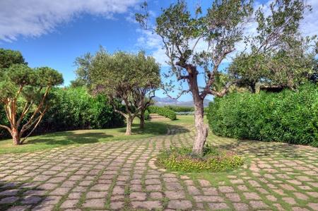 A luxurious Mediterranean Garden Plants with paved