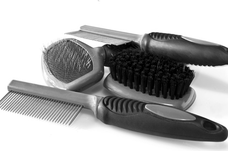 Carding brush, brush and comb for grooming the dog Stock Photo - 9264281