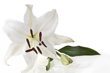 One white liliac on a white background  photo