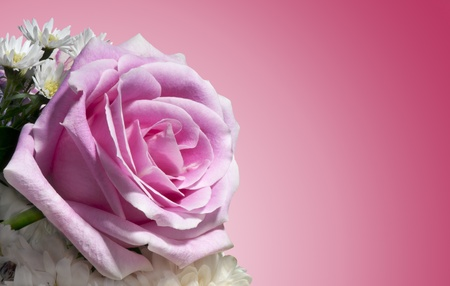 Composition of flowers on a white background  photo