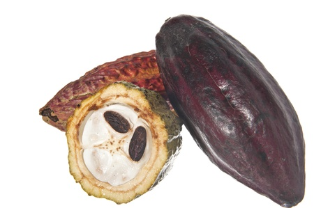 fruit of the cocoa tree on white background photo