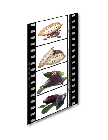 filmstrip of the fruit cocoa  on white background photo