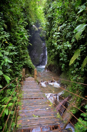 A waterfall in the rainforest of Ecuador