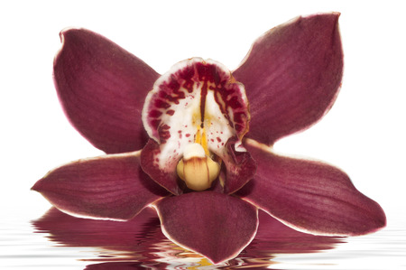a elegant orchid on the white backgroud photo