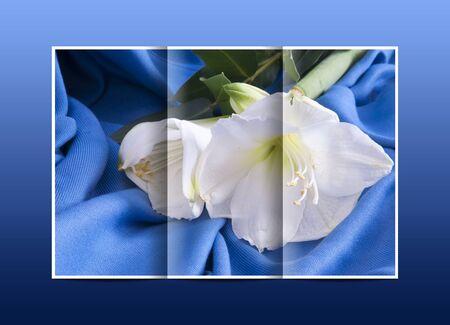 belladonna: brochure white flower amarillo on a blue background