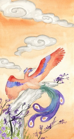 chinese phoenix: Hand painted watercolor of a colorful phoenix  Stock Photo