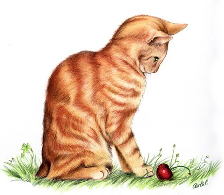 Cute hand drawn Manx Red cat, made with pencils.