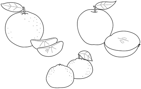 tangerine: Apples, oranges and tangerines  coloring illustration of winter fruits