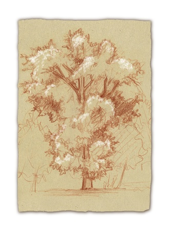 Oak-tree, artwork hand drawn with white chalk and pencils on sepia paper  Real life drawing  photo