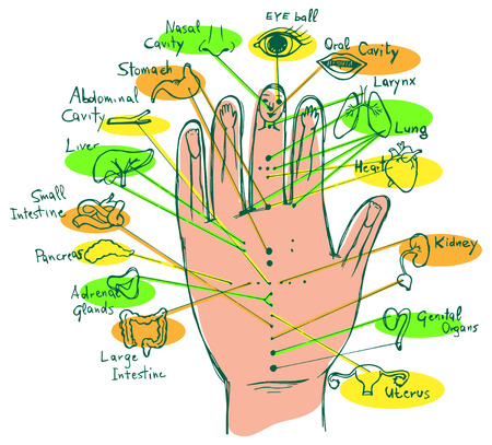 Hand Reflex Point Chart, palmar view
