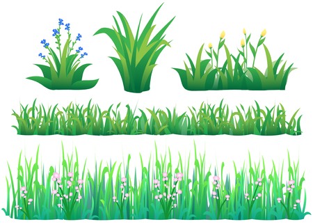 garden plant: illustration of grass with little flowers.