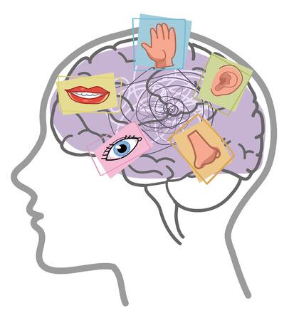 Il cervello umano disturbo vettore 5 sensi Archivio Fotografico - 72861479