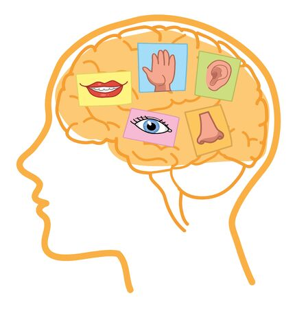 human touch: Senses illustration. Sight, hearing, taste, smell and touch in the human brain.