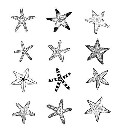 estrella de mar: Estrellas de mar establecer .hand dibujado ilustración vectorial